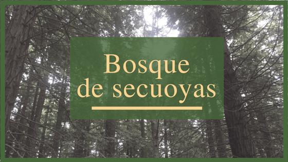 El Bosque de Secuoyas de Cabezón de la Sal
