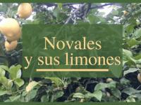 Los limones de Novales